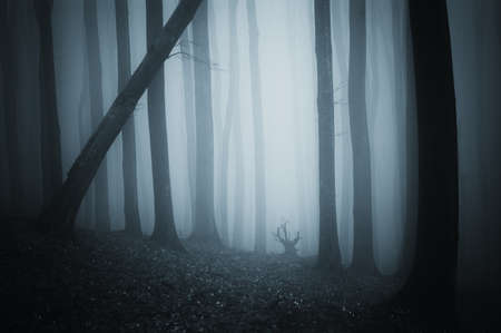 scary scene from a dark cold forest with blue fog  photo