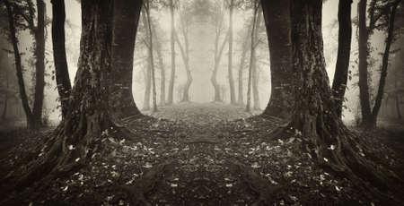 대칭: 숲 세피아 마법의 문 스톡 사진