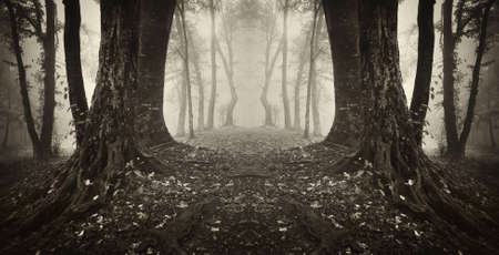 mystical forest: magical gate in a forest sepia