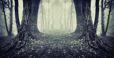 통로: 안개와 어두운 신비한 숲에서 비밀 통로의 대칭 사진 스톡 사진