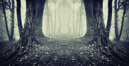 symmetrical photo of a secret passage in a dark mysterious forest with fog  photo