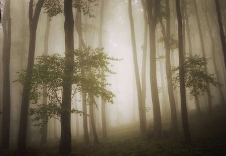 dreamy photo of a beautiful green forest with fog  Stock Photo