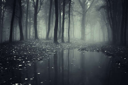 forest background: pond in a forest with fog and fallen leafs