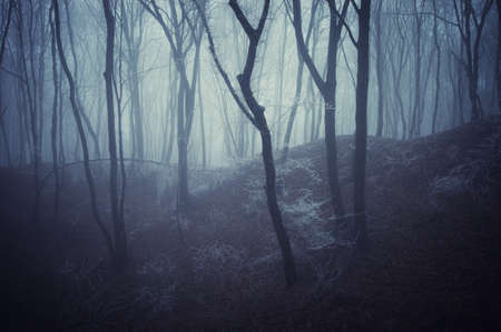 horror scene of a dark forest with blach trees and blue fog  Stock Photo