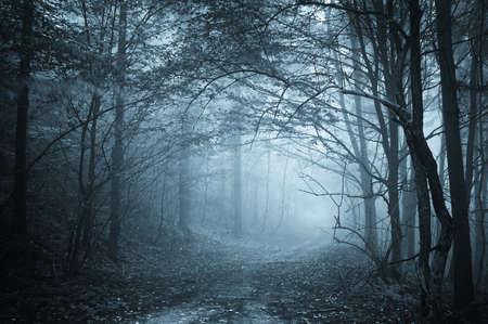 blaues Licht in einem geheimnisvollen Wald mit Nebel