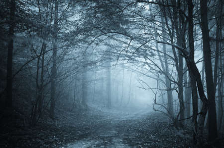 misty forest: blue light in a mysterious forest with fog  Stock Photo