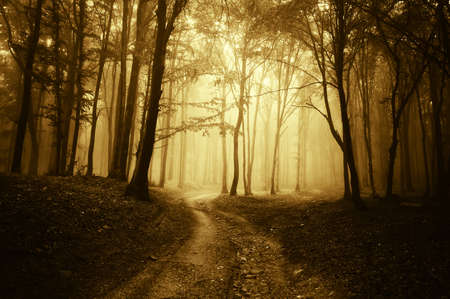 horror scene with a road through golden forest with dark trees