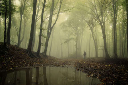 woods lake: uomo in piedi in un verde bosco con la nebbia e gli alberi che riflettono nell'acqua