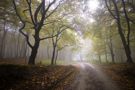 road through a colorful forest in autumn  photo