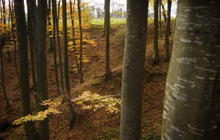 beautiful forest in autumn Stock Photo - 13078502