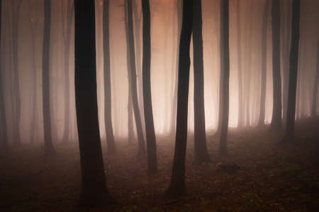 evening in an elegant forest with strange red fog Stock Photo - 13078478