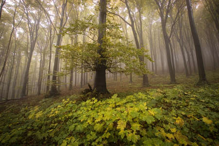 old tree in a beautiful forest at autumn Stock Photo - 13078507
