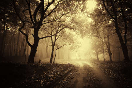 beautiful autumn in a golden forest with fog  Stock Photo