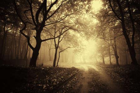 schönen Herbst in einem goldenen Wald mit Nebel