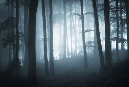 Misty dark forest at dusk