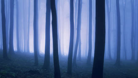 Bright light in an elegant blue forest with fog