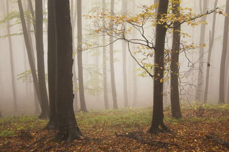 autumn landscape from a forest with beautiful colors and fog  Stock Photo - 13078494