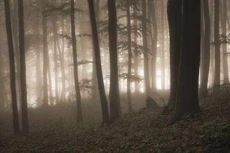 geheimnisvollen Wald mit Nebel und Licht im Hintergrund