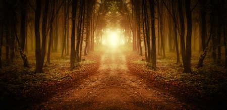 """Droga przez zÅ'otym lesie o zachodzie sÅ'oÅ""""ca Zdjęcie Seryjne"""