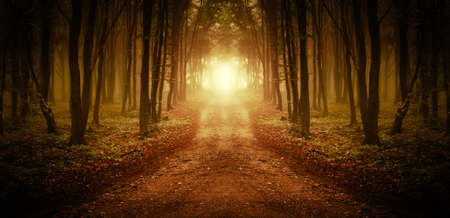 Straße durch einen goldenen Wald bei Sonnenuntergang