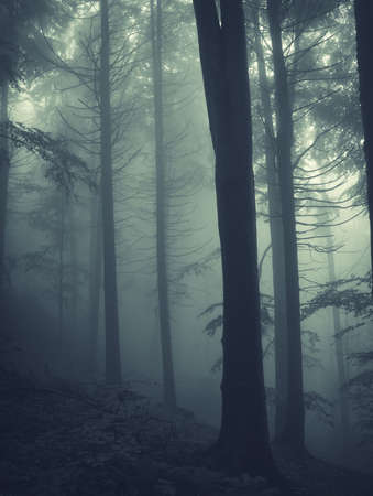 vertical photo of pine trees in a forest with fog