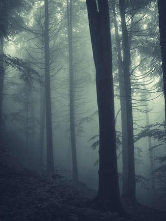 vertikale Foto von Pinien in einem Wald mit Nebel Standard-Bild