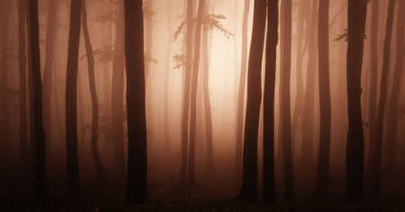 Abstract red mysterious forest with fog photo