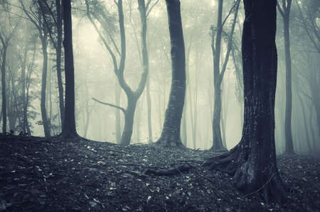 odd looking tree in light in a foggy mysterious forest  Stock Photo