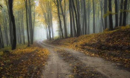 road through a misty forest with beautiful colors in autumn photo