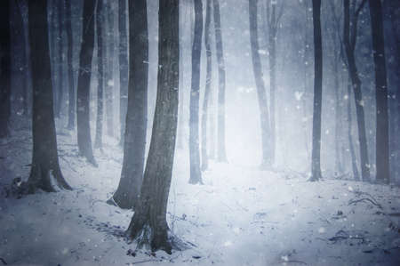 winter snow storm in a forest with wind blowing the snowflakes through the trees  photo