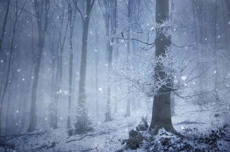 Schneefall in einem magischen Wald mit einer riesigen alten Baum im Winter