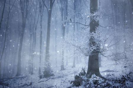 snowfall in a magical forest with a huge old tree in winter