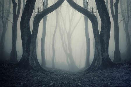 magiczna brama w tajemniczym lesie, z mgły