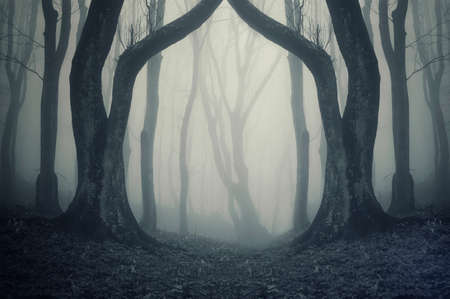 houtsoorten: magische poort in een mysterieus bos met mist Stockfoto