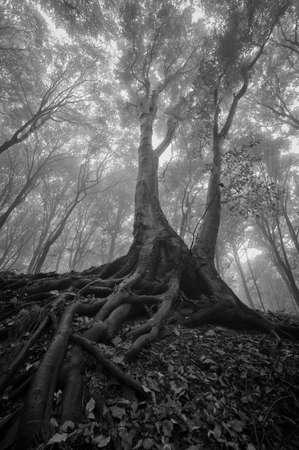 drzewo mokrymi korzeniami w lesie
