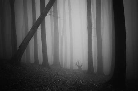 dark forest with fog black and white  Stock Photo - 13403294