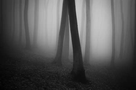 dark forest black and white Stock Photo