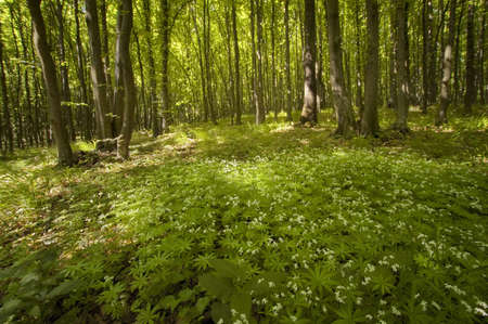 green forest in summer with white flowers on the ground photo