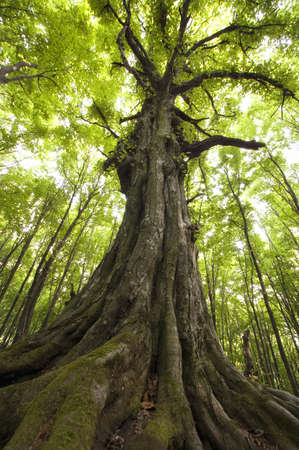 vertical photo of an old tree in a green forest
