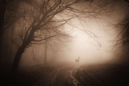 dia y noche: venados en un bosque de niebla en una ma�ana de verano
