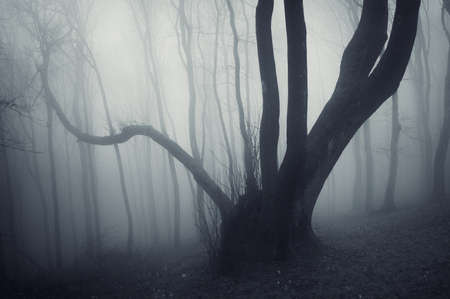 strange looking tree in a dark forest with fog  photo