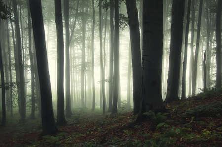 Sonnenaufgang in einem grünen Wald mit Nebel und dunklen Bäumen