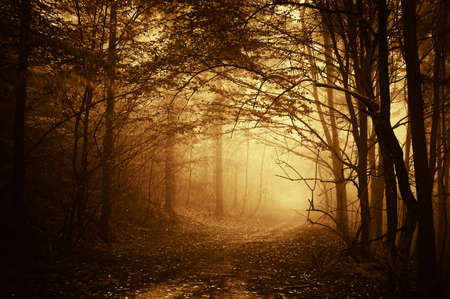ciepłe światło padające na drogę w ciemnym lesie jesienią