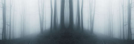 misty strange forest after rain  photo