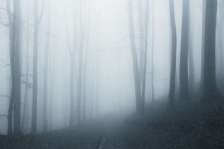 misty and mysterious forest after rain  photo