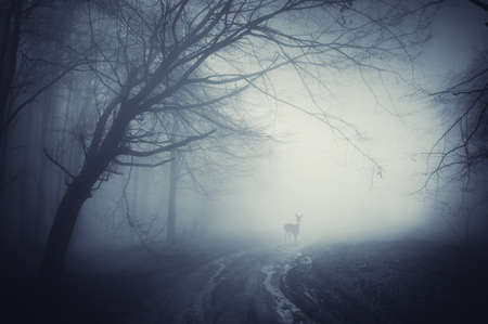 hidden: deer on a road in a dark forest after rain