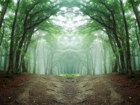 pad door een mysterieus bos