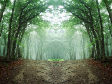 path through a mysterious forest