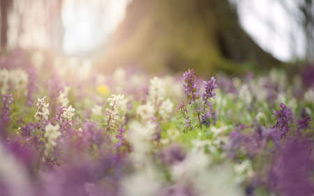 flowers and bright sunlight in a colorful forest on a spring day  photo