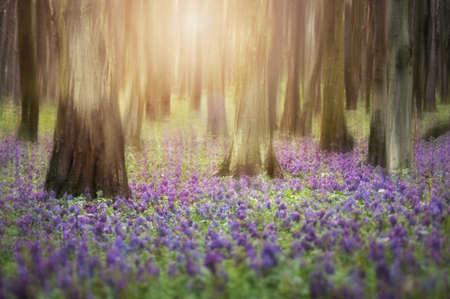 sunrise in a forest with flowers covering the ground